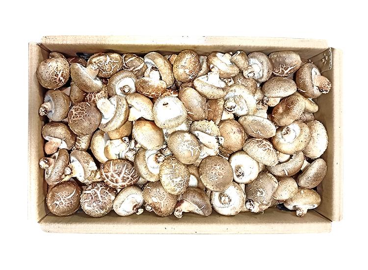 수입표고버섯/박스